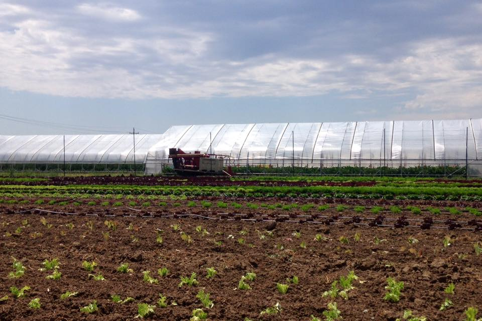 Inside the lettuce fortress: We planted our next succession of head lettuce and harvested our first succession of carrots today! See y'all at the market!