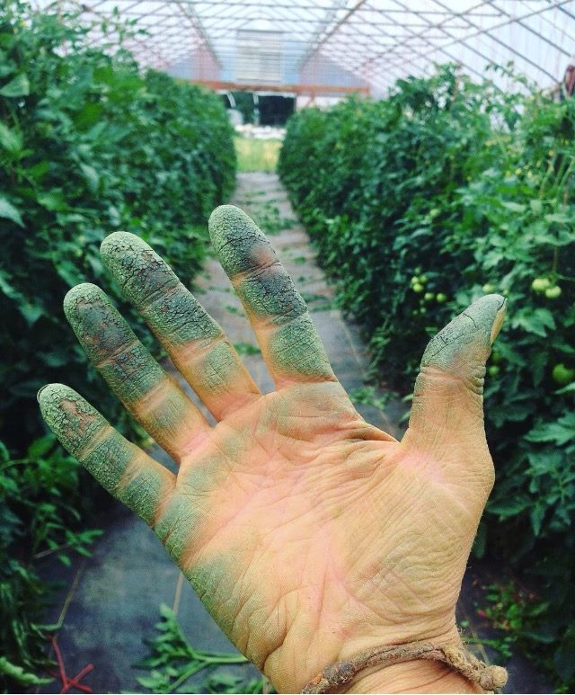 This brings a whole new meaning to the term  Green Thumb !