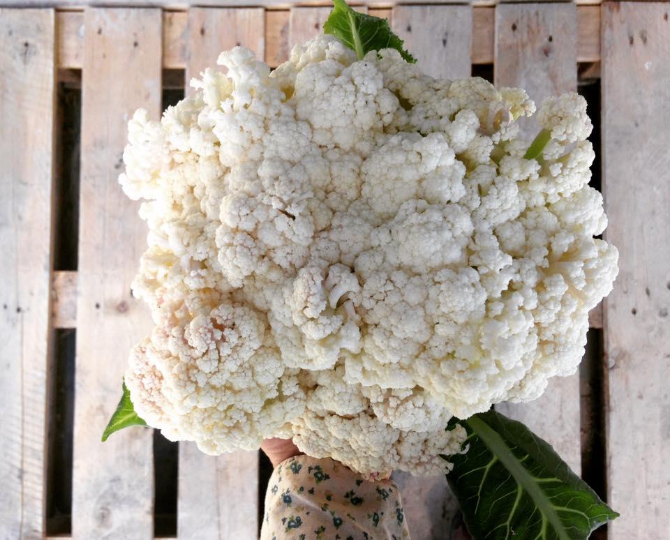cauliflower_native_hill_farm.jpg