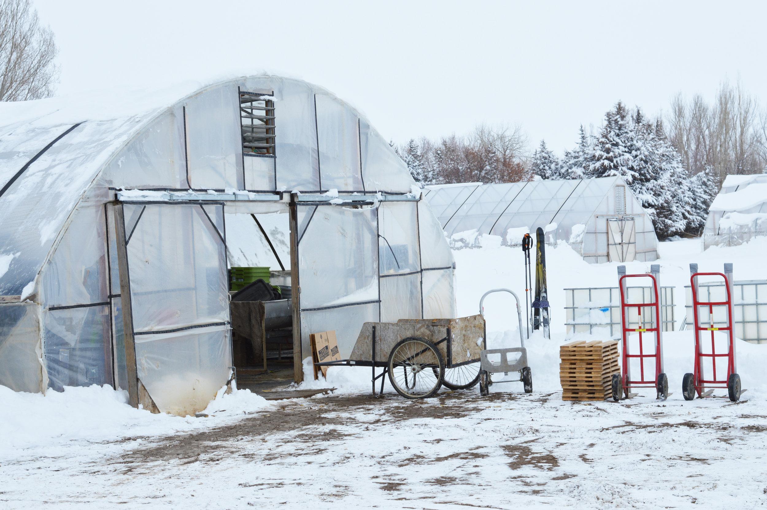 native-hill-farm-winter.jpg