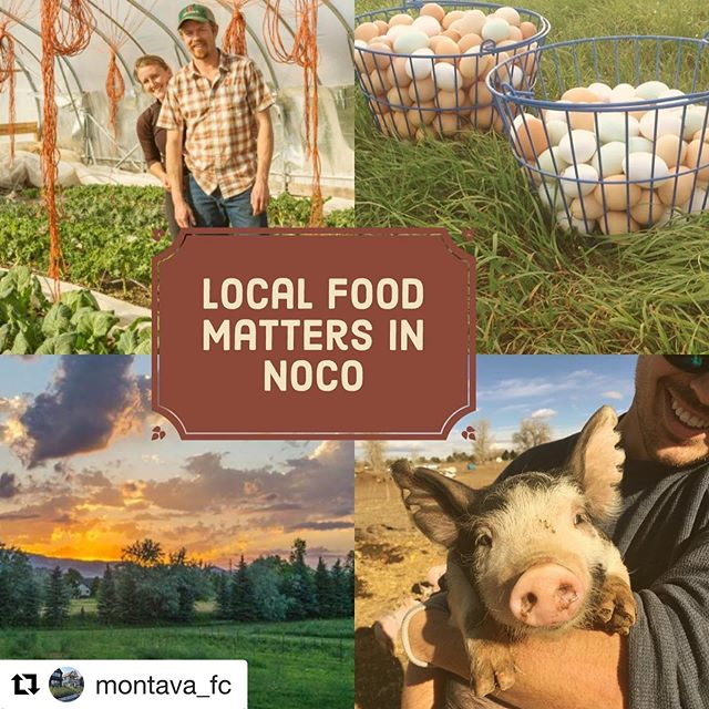 Hey friends! Just in case you hadn't heard yet, we are on a short hiatus as we work to transition to a bigger farm at @montava_fc agri-urban housing development in NE Fort Collins. Farm shares will be on sale in January 2020! Thanks for your patience and support during this time. We ❤️ you all! #nativehillfarm #fortcollins #eatlocal #eatyourgreens #organicfood #farmingfortcollins