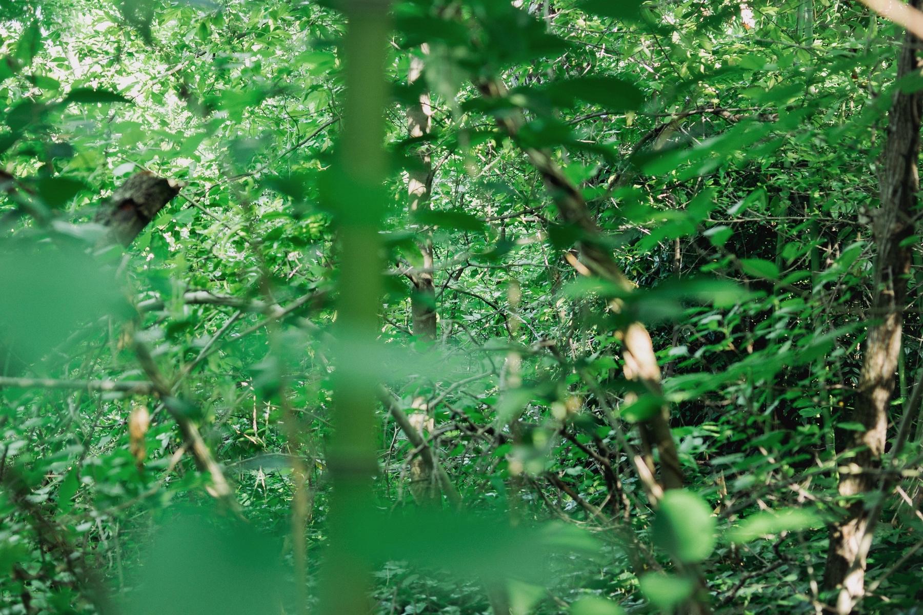 mel-tree1-3.jpg