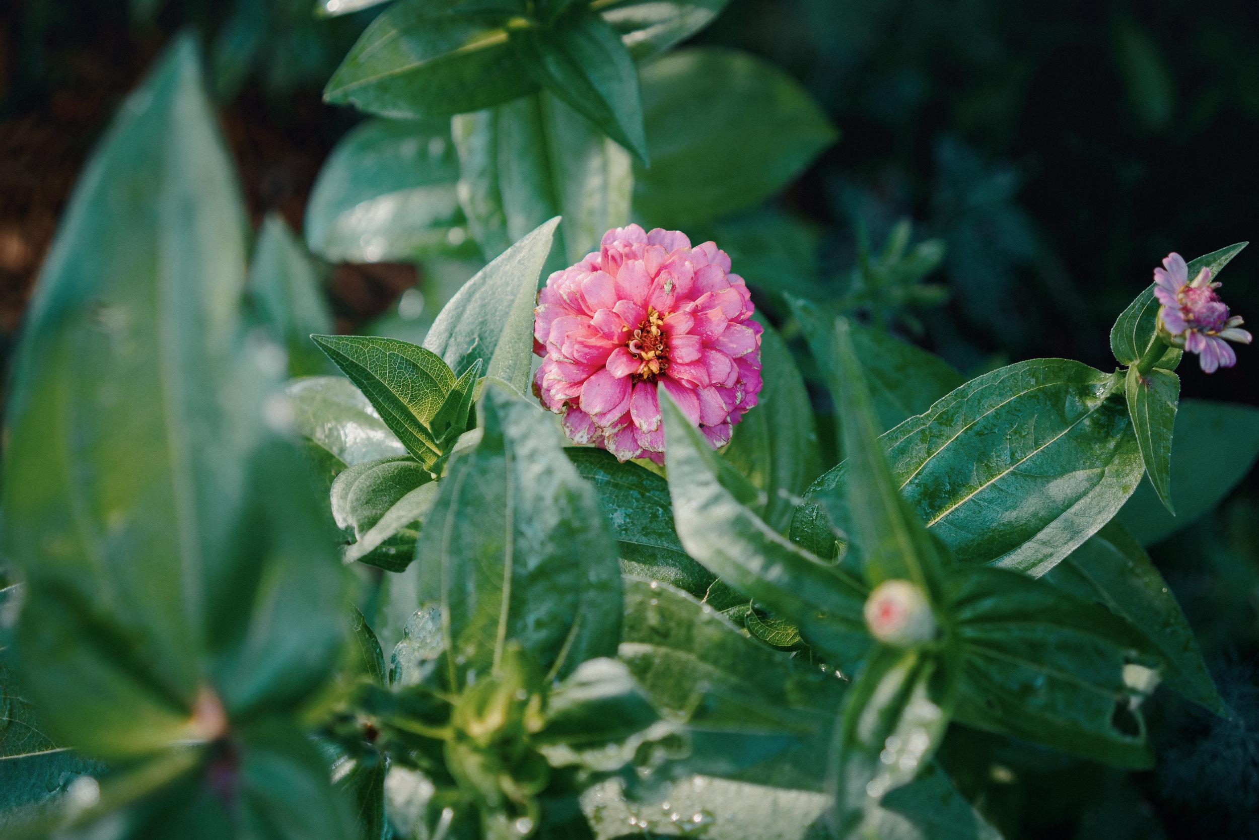 june2019-garden-2.jpg