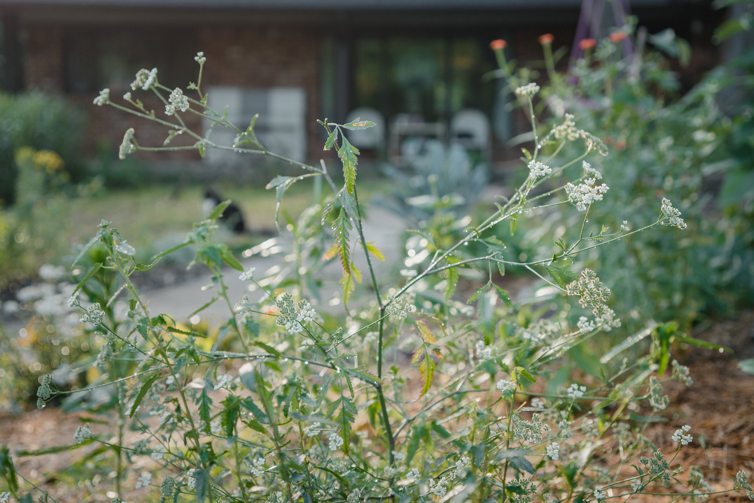 june2019-garden-3.jpg