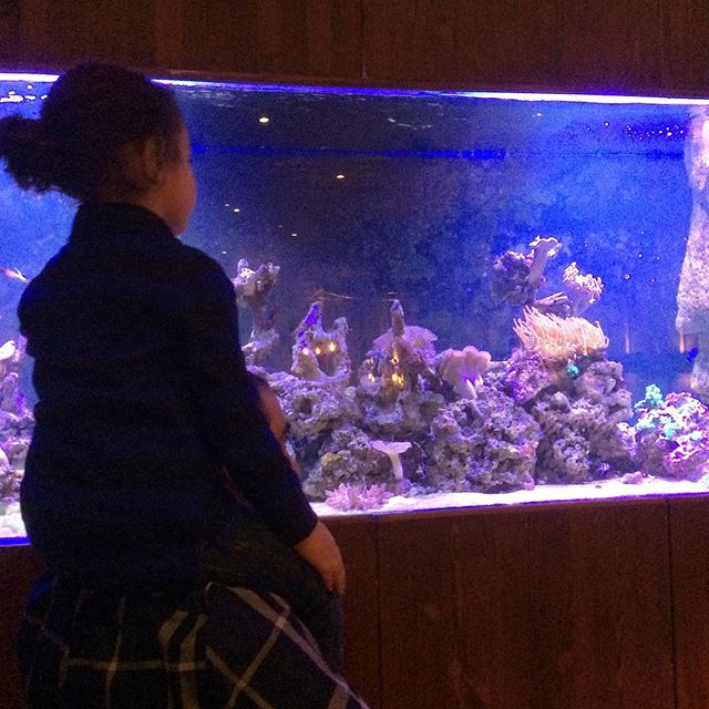 Aquarium @ Flames