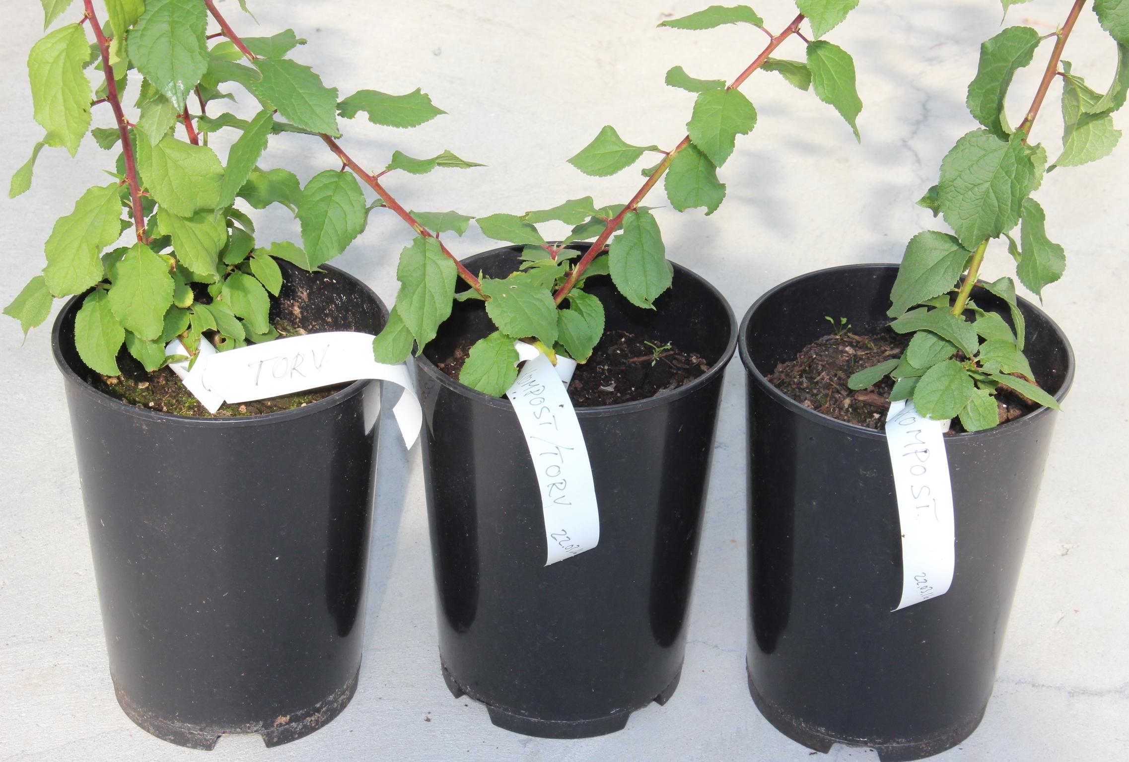 Testforsøk på Njøs med utprøving av ulike vekstmedium for frukttre (SIMAS-kompost, torv og ulike blandingar av desse).