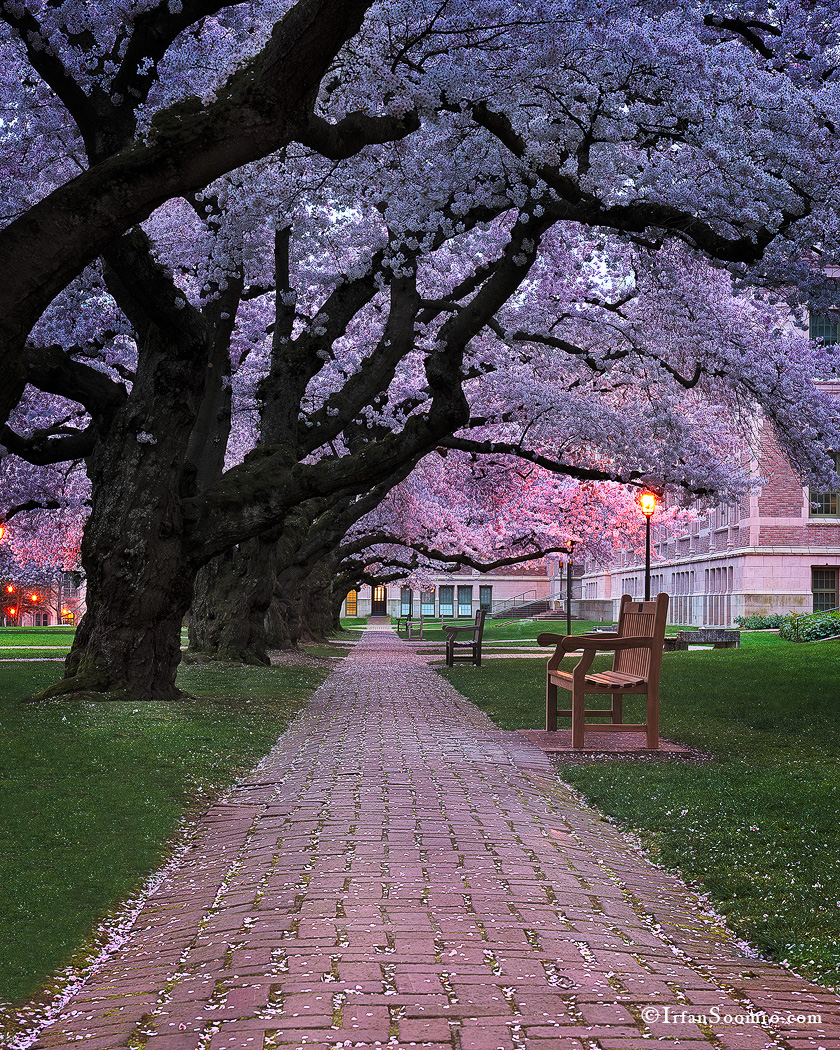 Blossoming Pathway