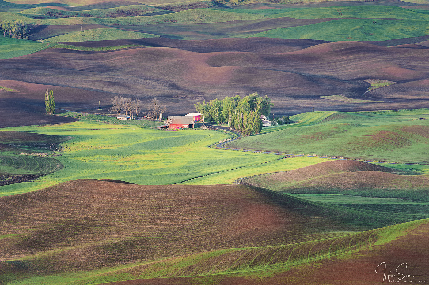 1105-Palouse-045-_DSC5163-1-copy-web.jpg