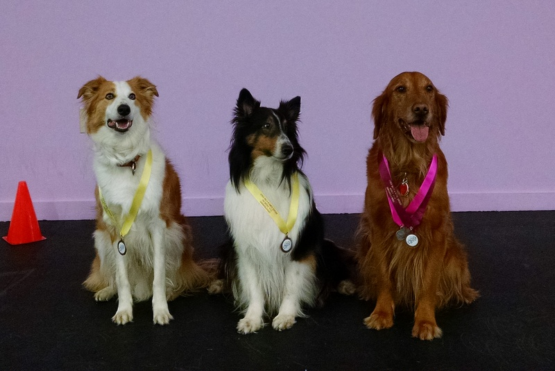 Bigzbee, Chase, and Scarlett have earned three titles in Cyberrally-O, Dance Division (Preliminary, Pre-Bronze , Bronze) and are working on their Pre-Silver now. They are good buddies, as are their dance partners, Dancing Paws members Carolyn Ross, Pat Nash and Anne Stanley.