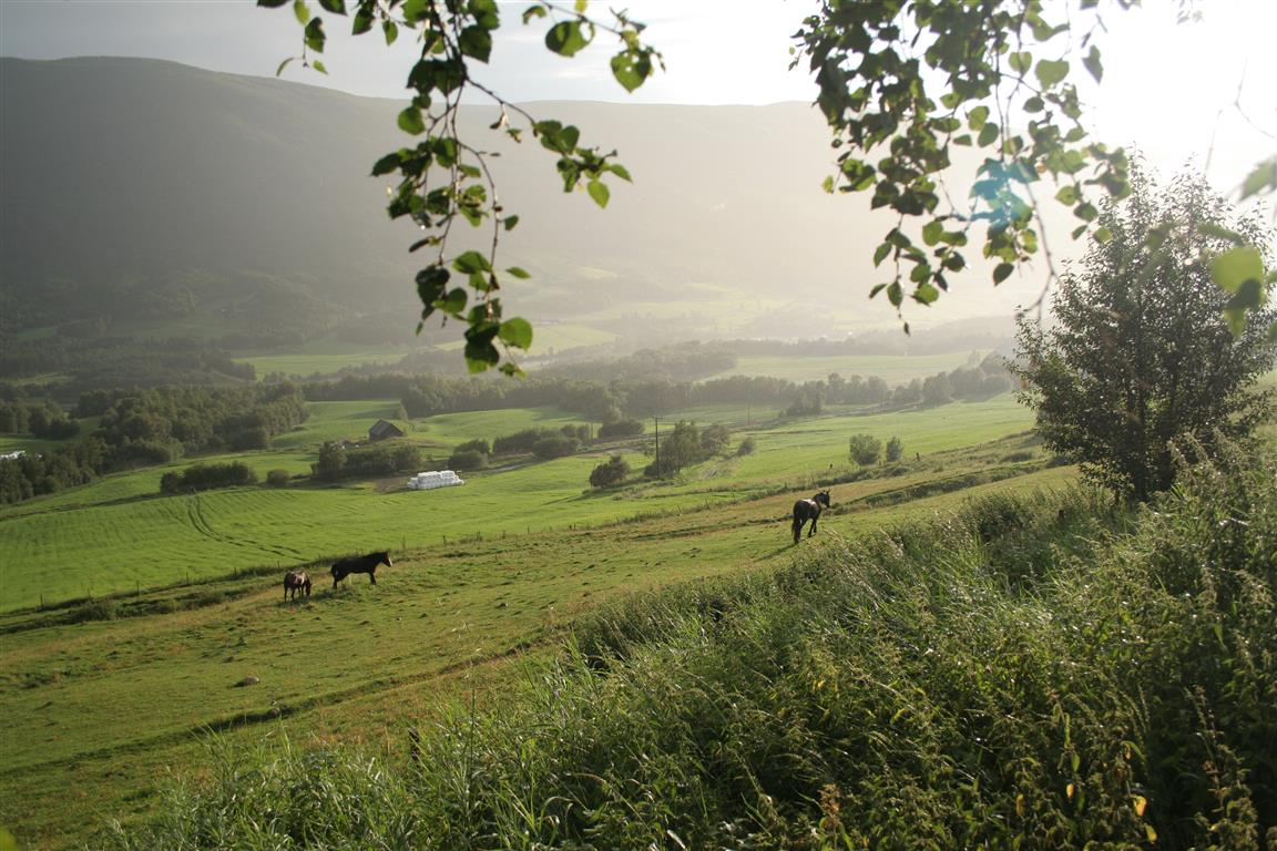 hester-i-regn.jpg