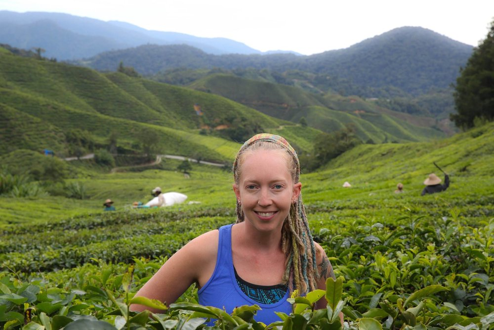 photo from Cameron Highlands, Malaysia.jpeg