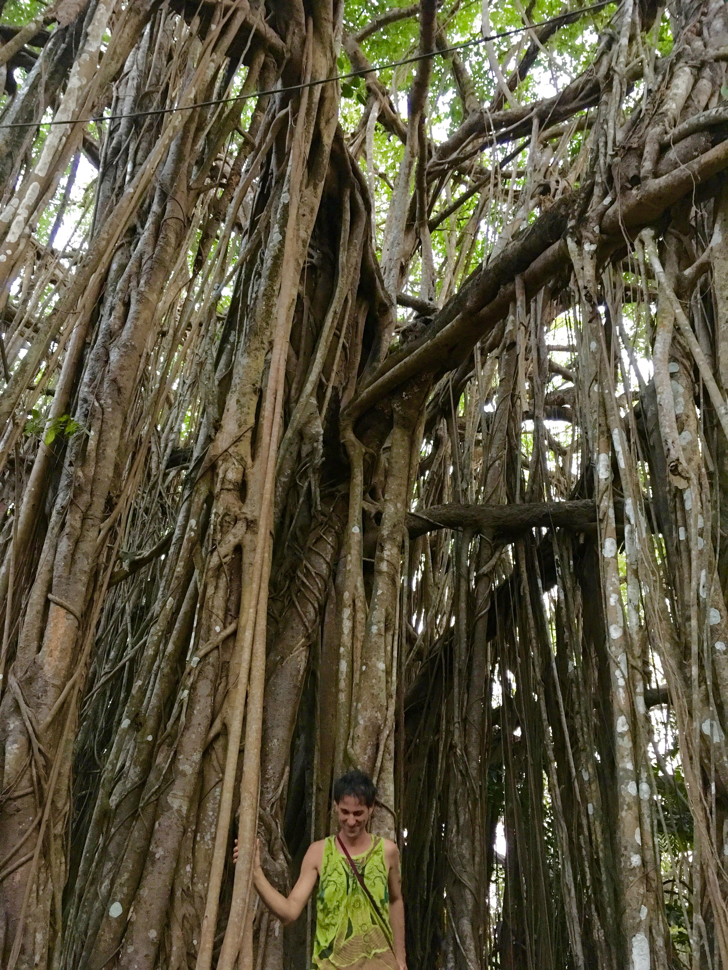 A friend standing under a massive banyan in Goa. I always look at trees as inspiration when uncertainty and impermanence stare me in the face.