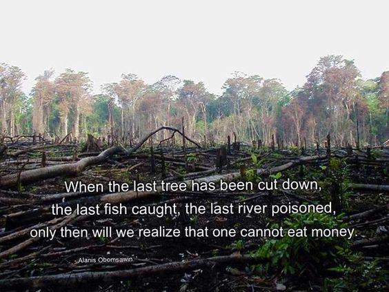 6221ac1045b0b63554bbca514c92a651--rainforests-rainforest-deforestation.jpg