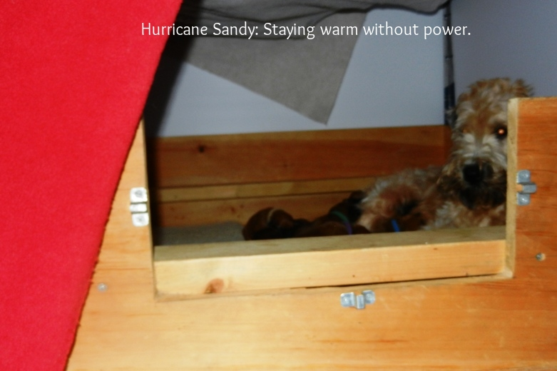 And_the_power_goes_10-29-12_-03.jpg