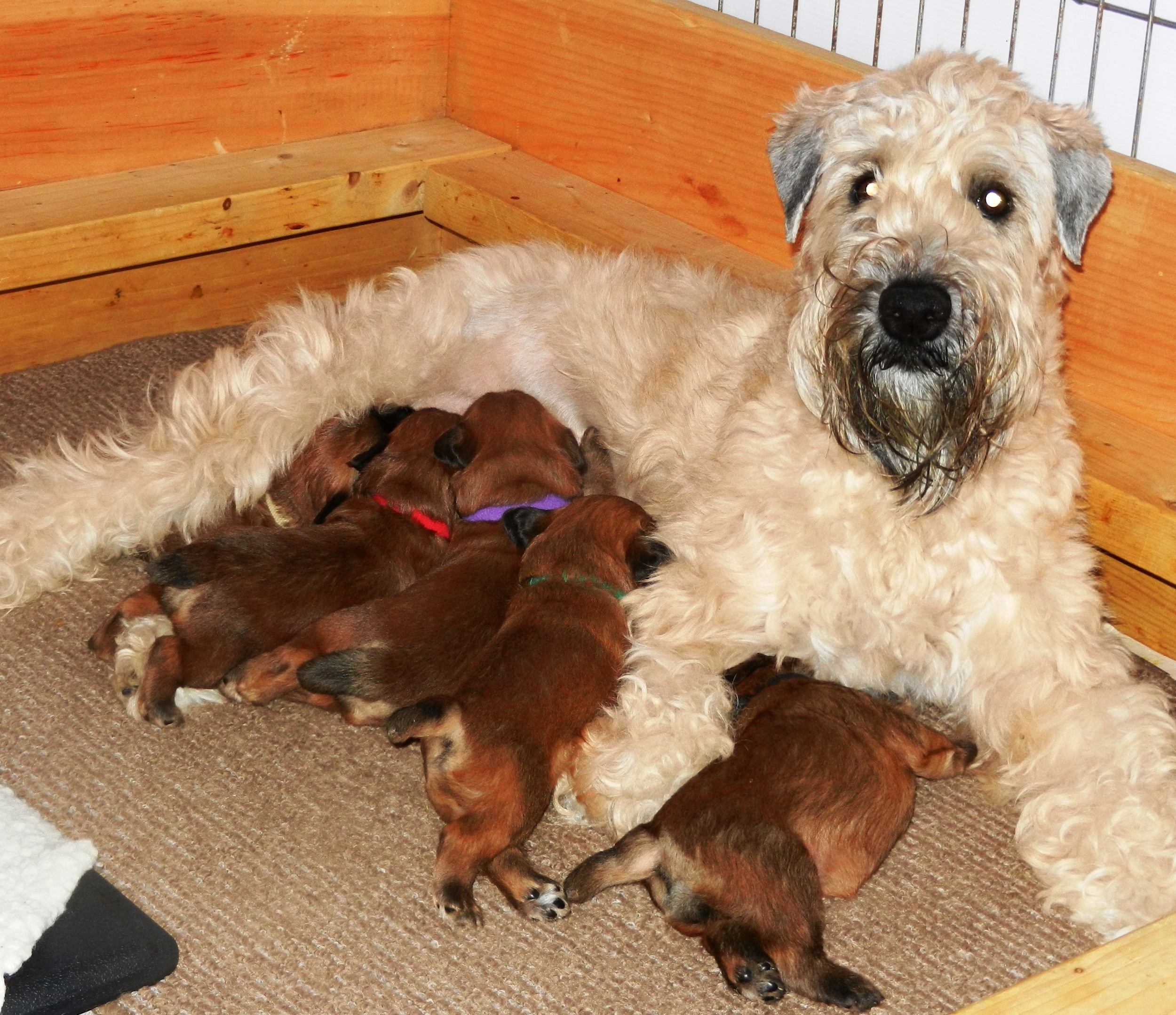 Evie and pups 07-09.JPG