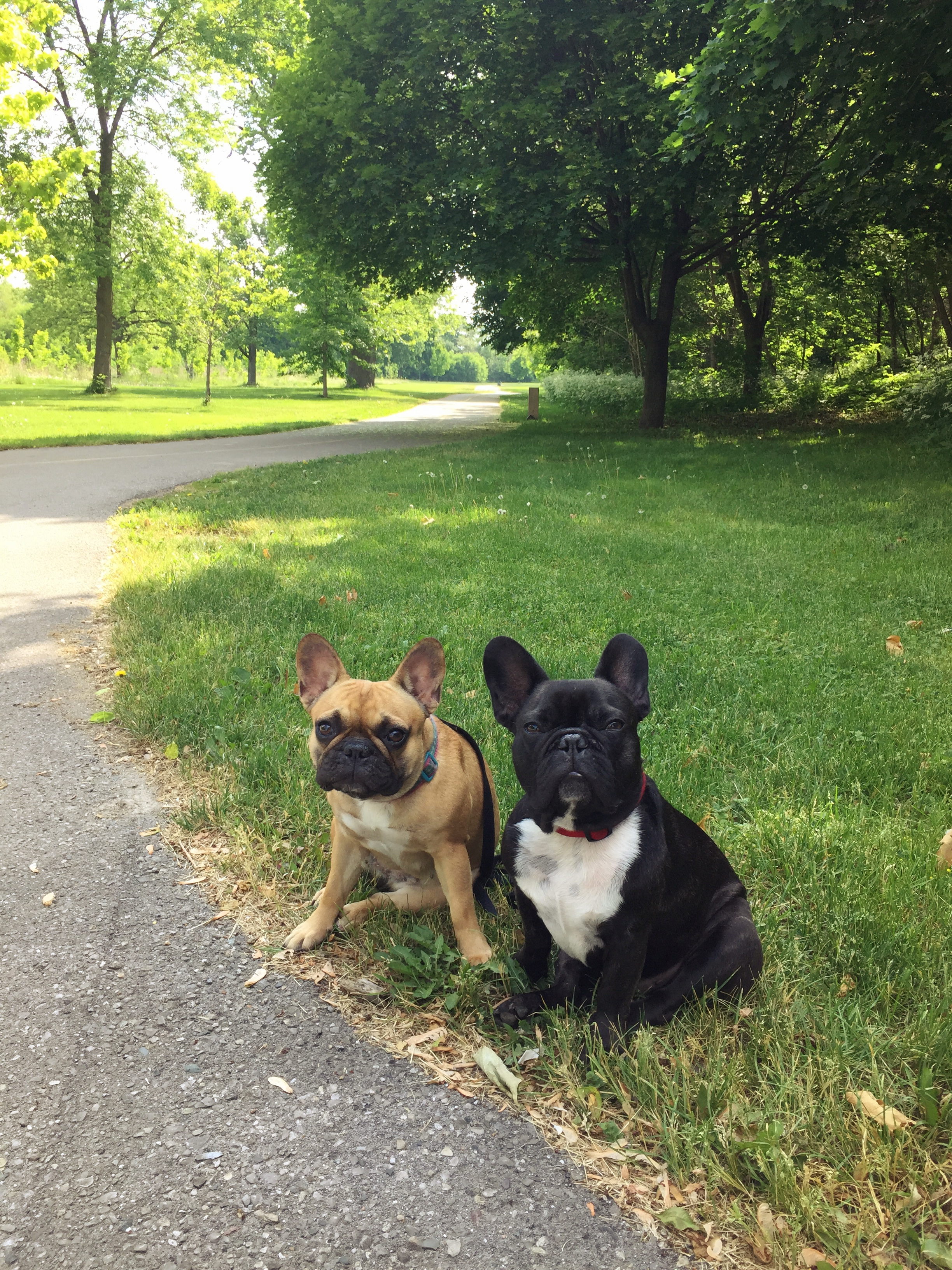 Me plus Mirabelle are saying GOODMORNINGTIMES at Watson Street Park, guys!! We go there lots and stuff!!