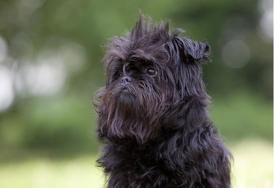 photo source: hond.petadvisor.nl
