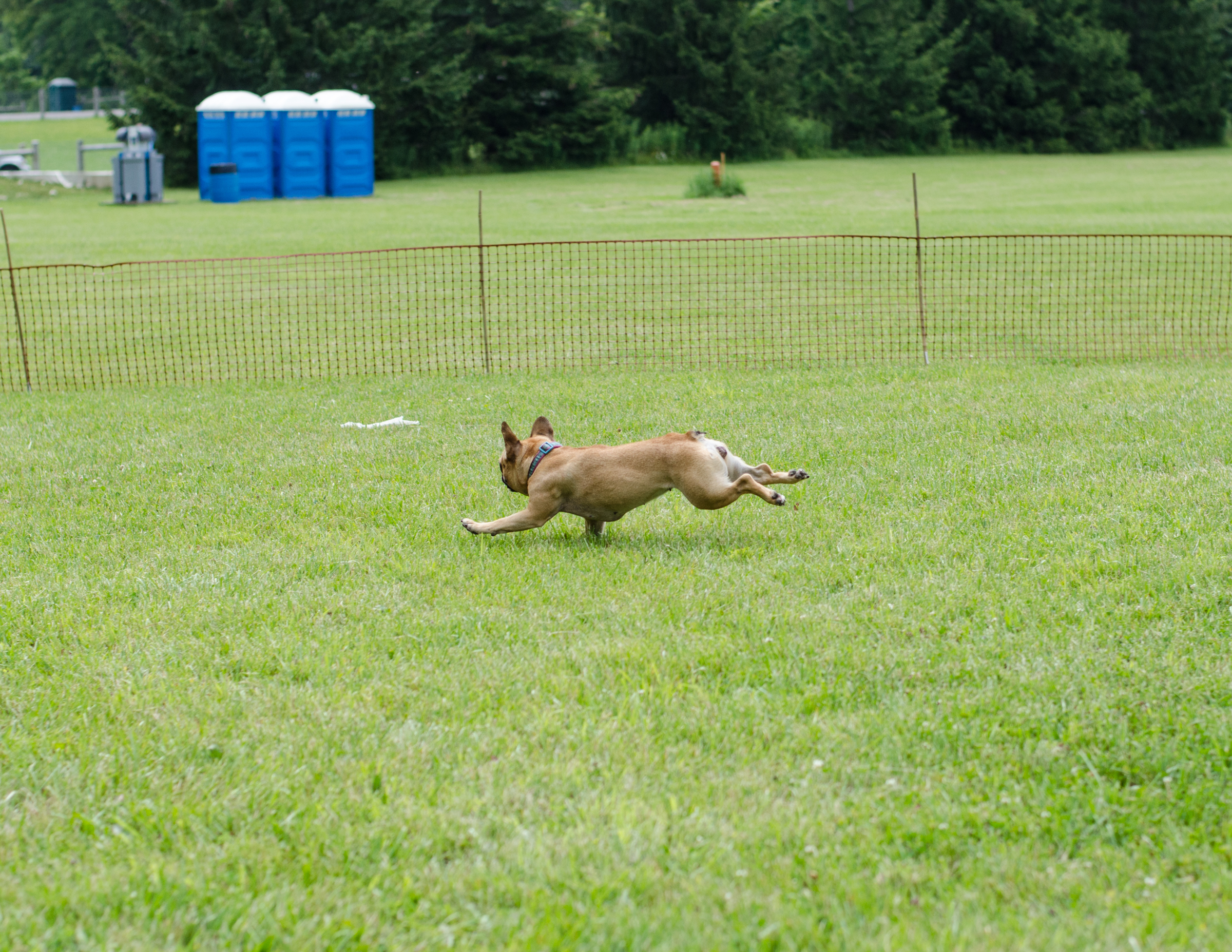 Doesn't Mirabelle look like a BUNNY!!?? Plus can you see the crinklebag she is chasing!!?? ...