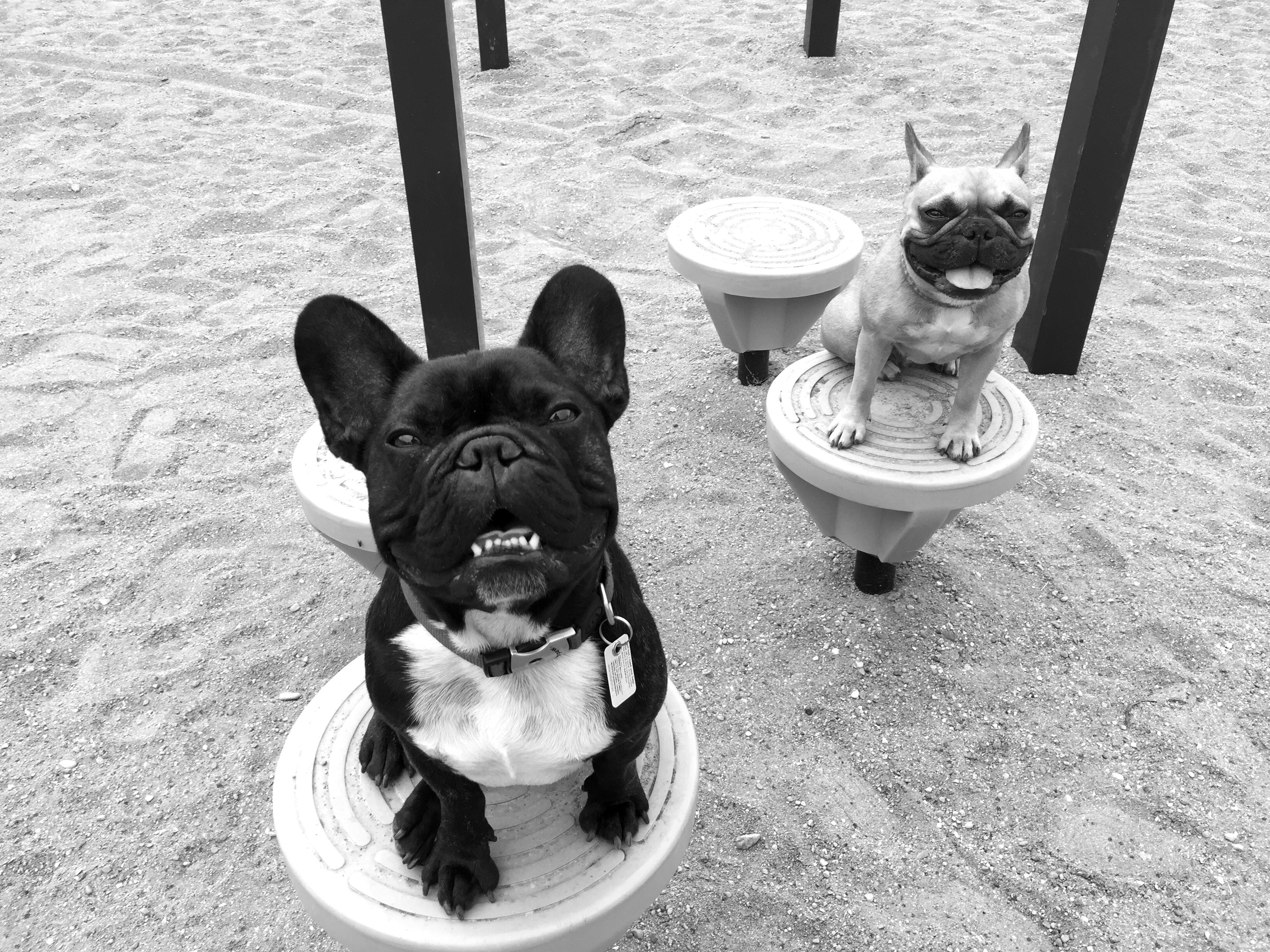 Hee hee!! Hi guys!!    This picturestory is me, ARCHIE BRINDLETON plus MIRABELLE too at a juniorperson goofballery park!! We are having HappyFunTimes poserating on some circleseats!! 😊 ...............