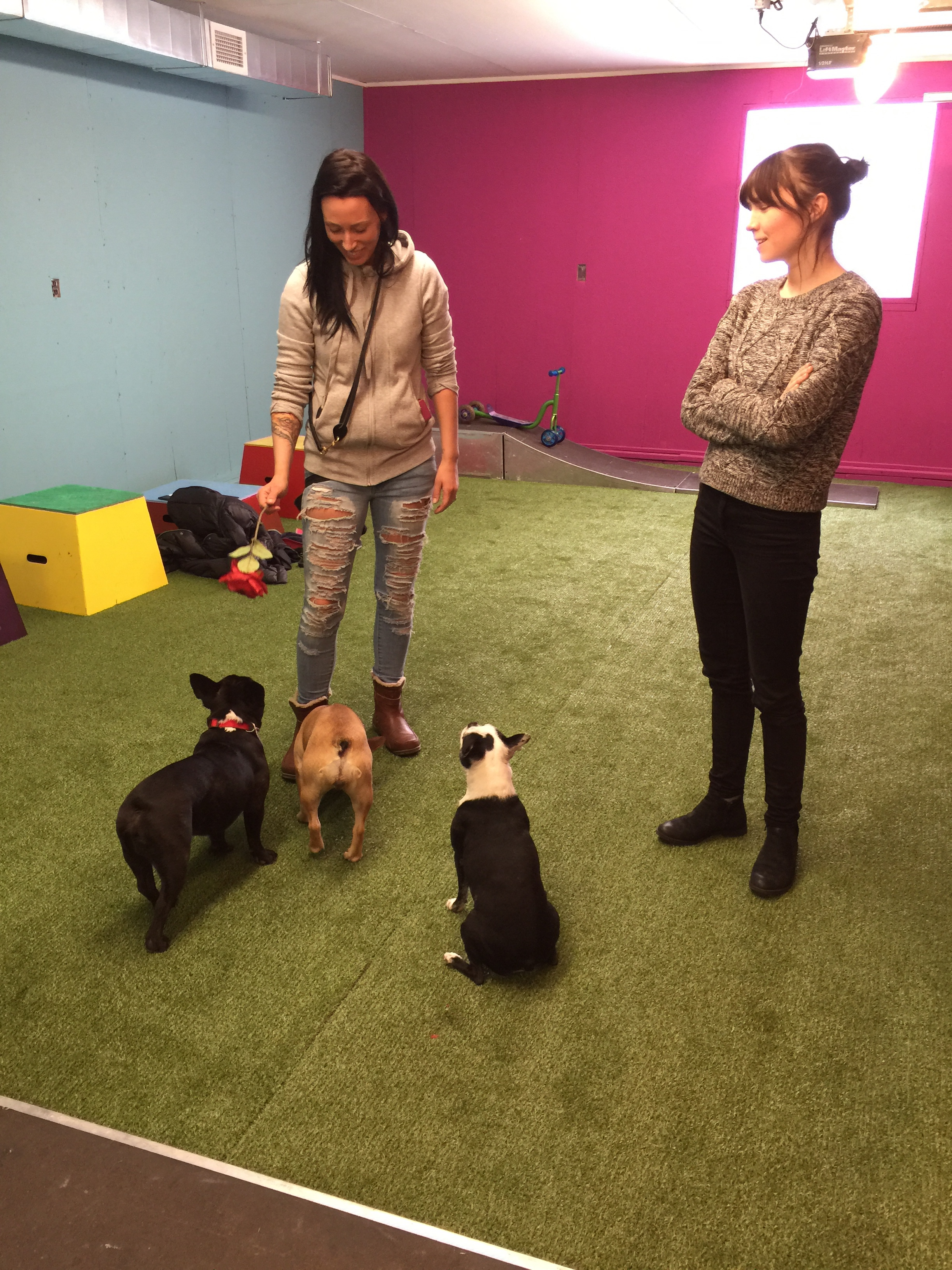 This is where MELISSA MILLET from IN DOGS WE TRUST plus THE ULTIMUTTS hang out!! Melissa is made out of awesome, you guys!! She is sooperfamous for teaching puppies how to be good puppy citizens, plus even how to do sooper'mazing trickery like the Ultimutts do with only positive lovings!! Yes!! That is why Mum plus Pop wanted to take me plus Mirabelle here so much!! To do brainlearning, butt to get more lovings too!!...................