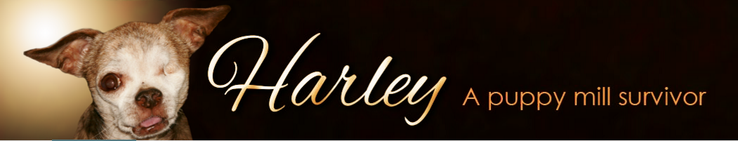 click to visit Harley's website