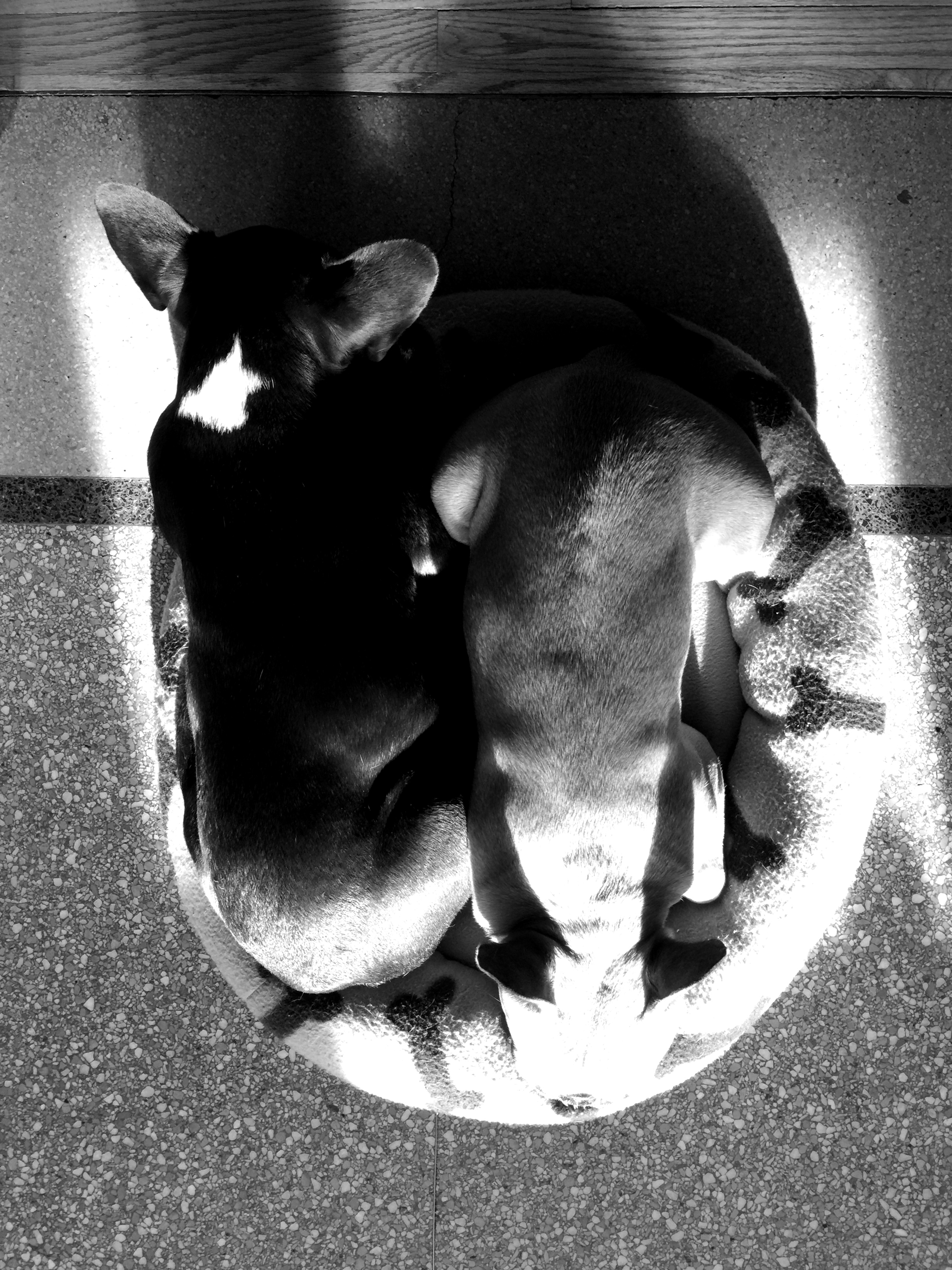 Nappingtimes with no rainbowparts! (black and white)