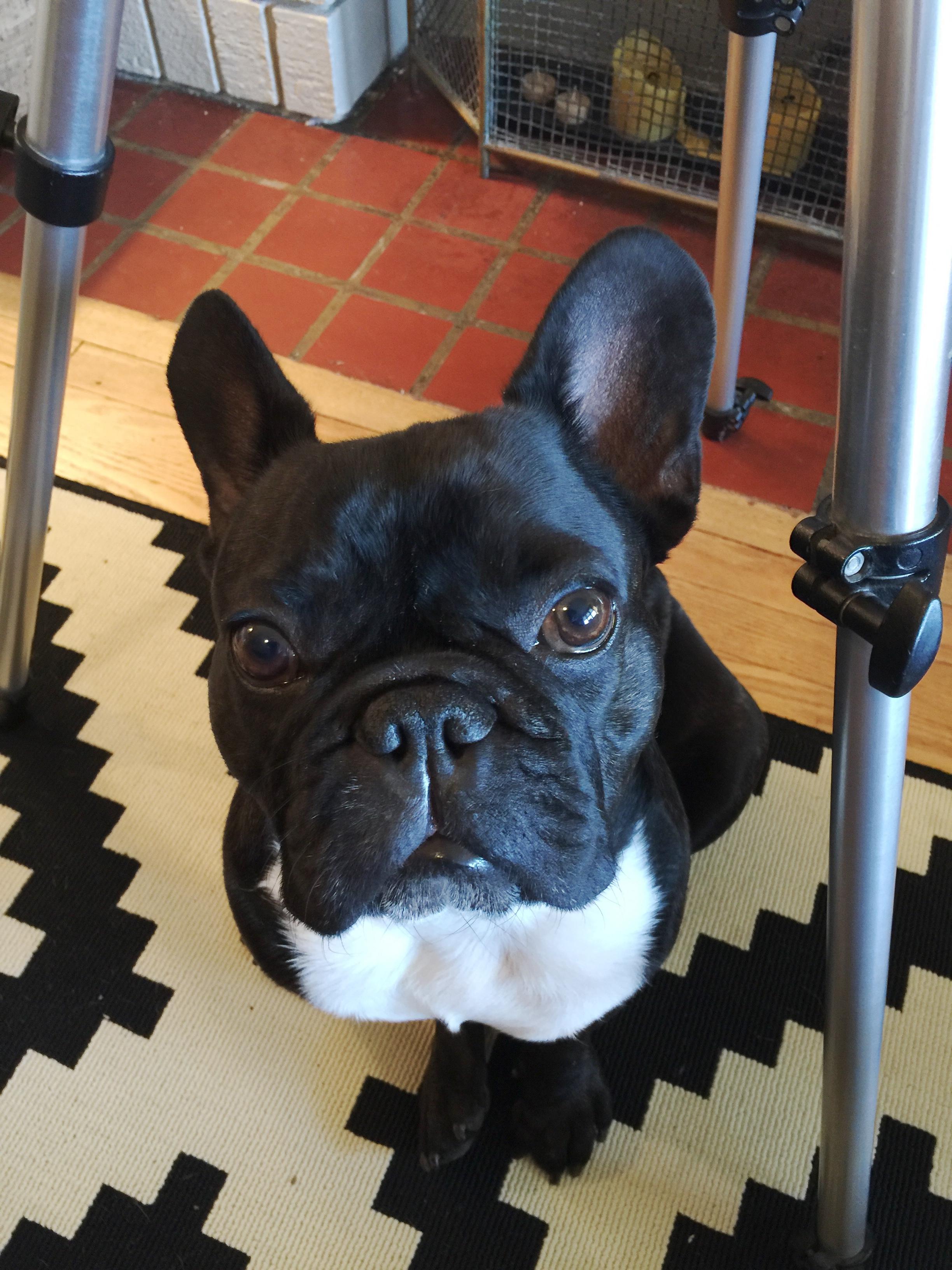 Hi everybuddy!! It's me, your bestest friendlypal, Archie Brindleton!!
