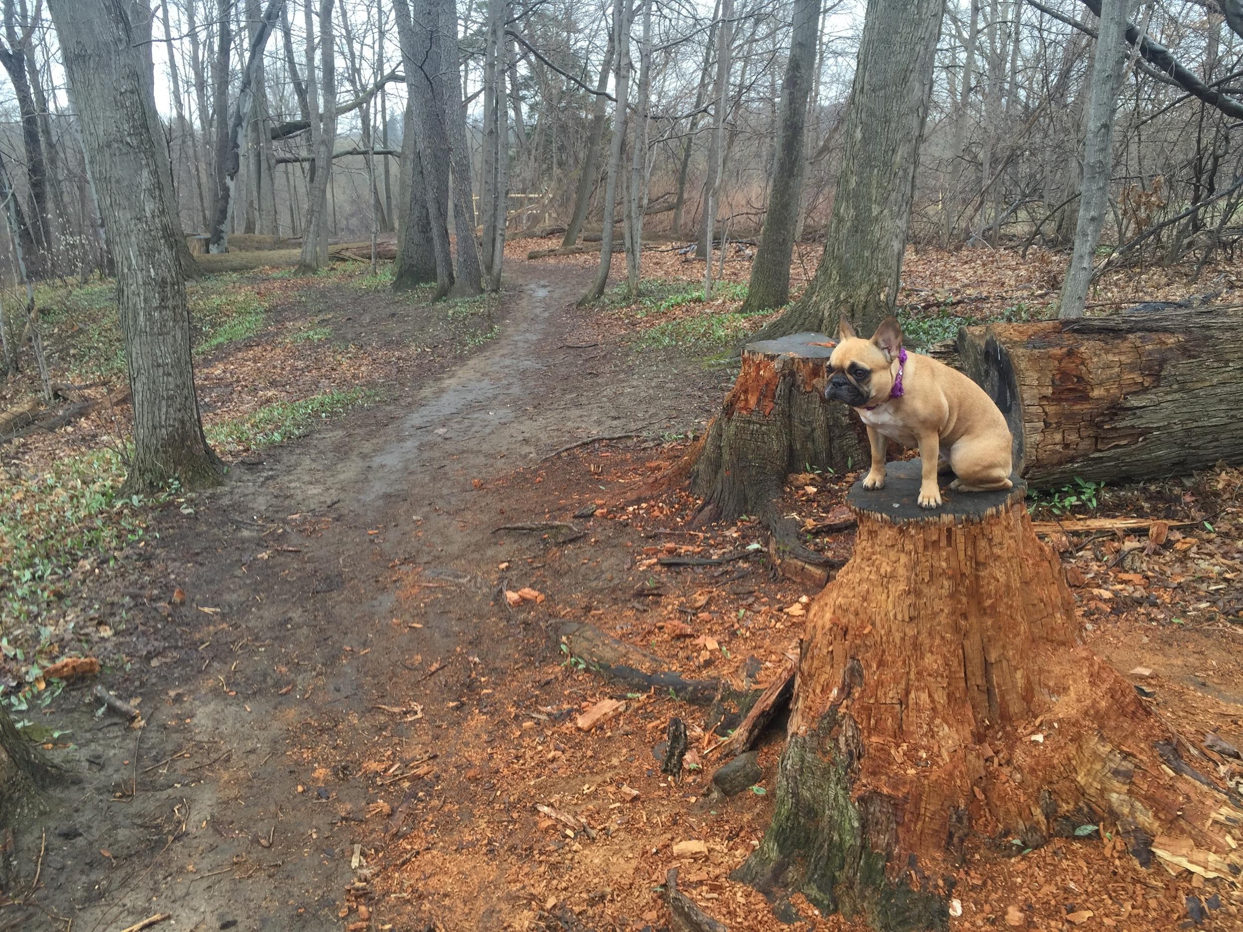 THIS TREEFOOT IS DISAVANISHING!!