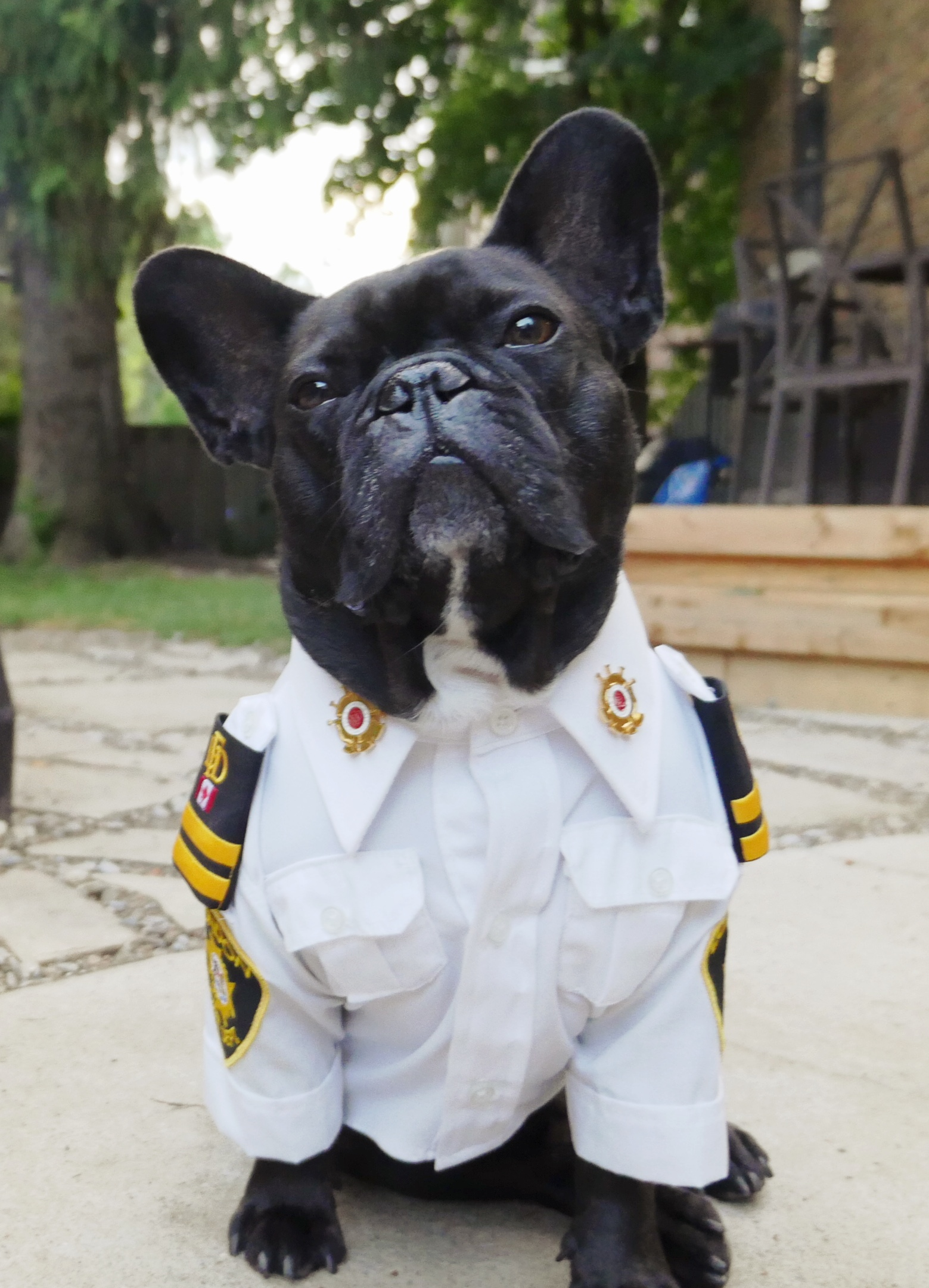 Assistant Fire Chief and Fire Safety Dog, Archie Brindleton