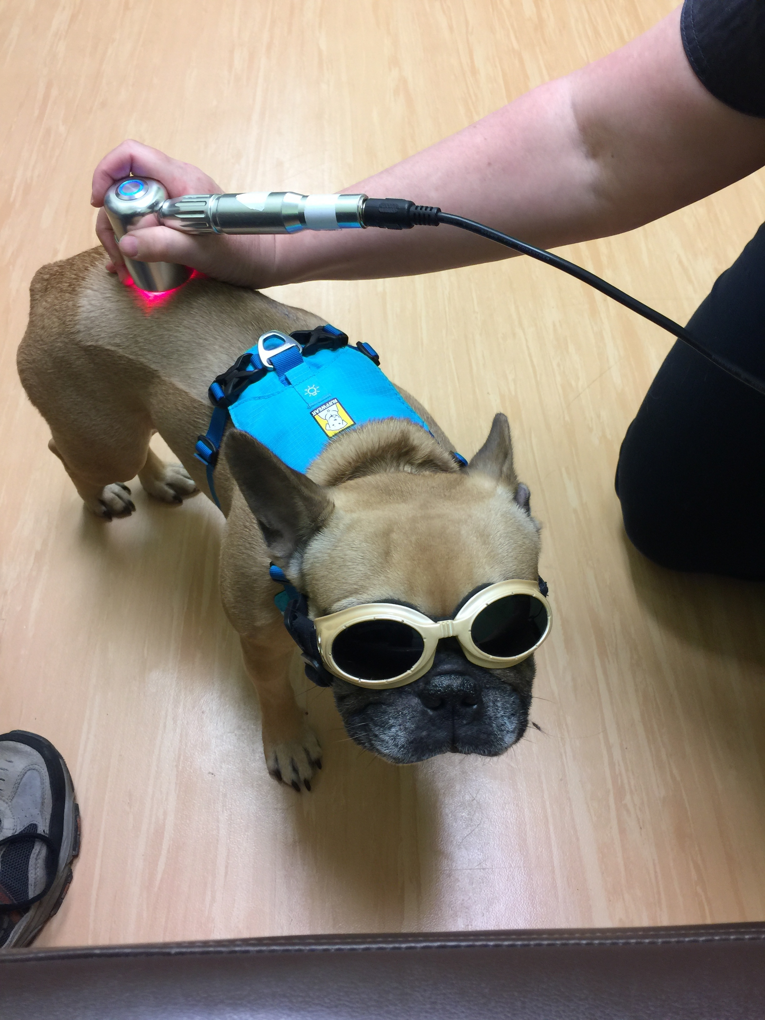 ( * Historically, Mirabelle really dislikes wearing things - ESPECIALLY over her eyes! But she loves the robotlasers and stands patiently without trying to take them off for the whole treatment! - Mum)