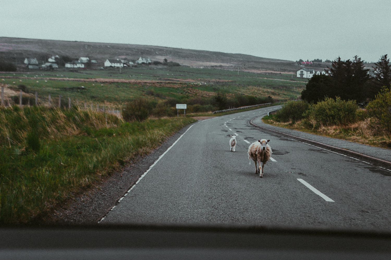 Isle of Skye   Scotland   2017   Essentials : Warm Memories
