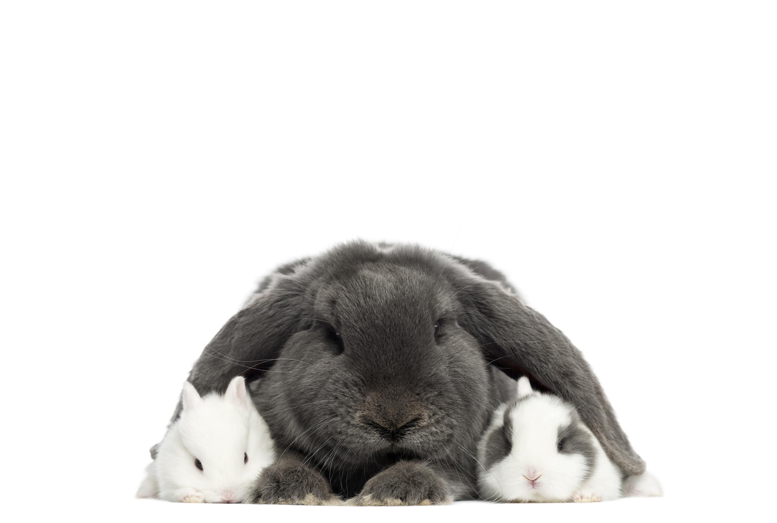 National Hamster Council    Guinea Pig Welfare    Rabbit Welfare Association and Fund    Rabbit care guide    Guinea Pig care guide