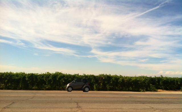 My trusty companion somewhere along the farm fields of the San Joaquin Valley