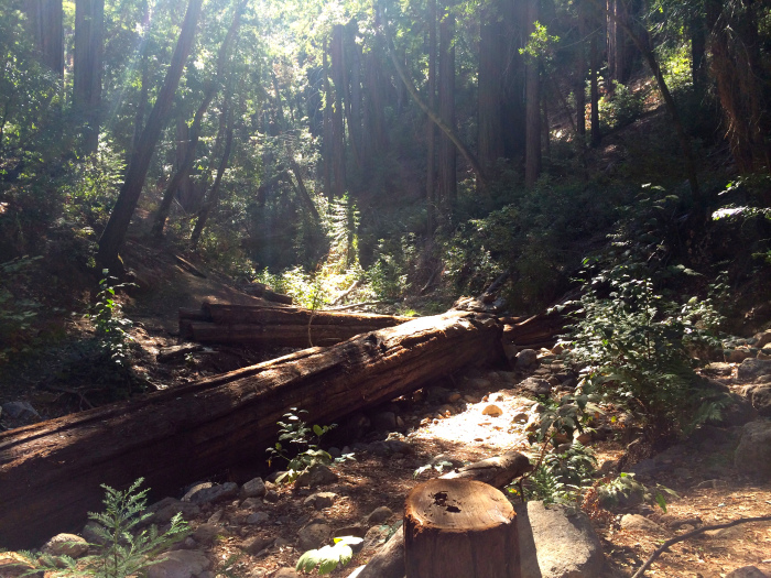 Big Sur - Amongst the redwoods in the Ventana Wilderness