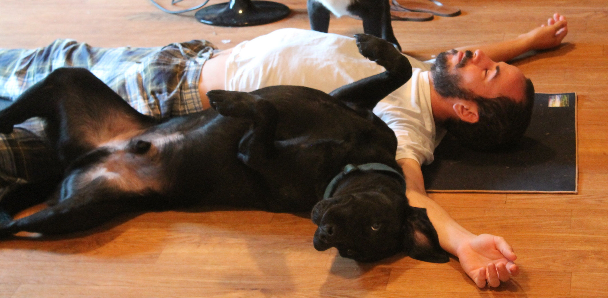 Dog yoga - Be You Yoga