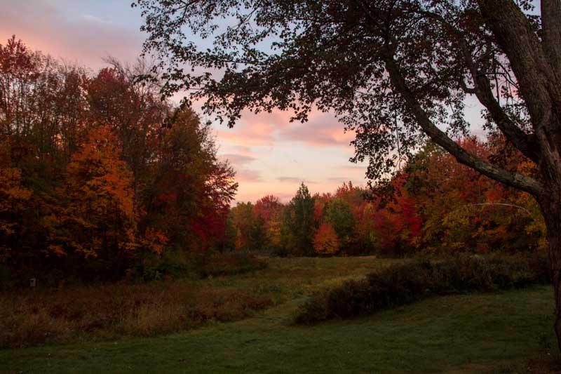 Sunrise over the backyard
