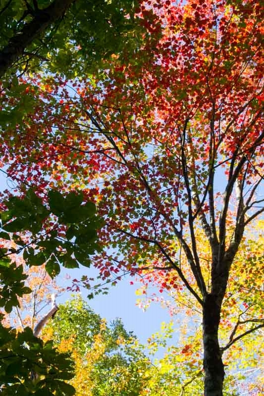 Fall Colors on Sisson Hill Road