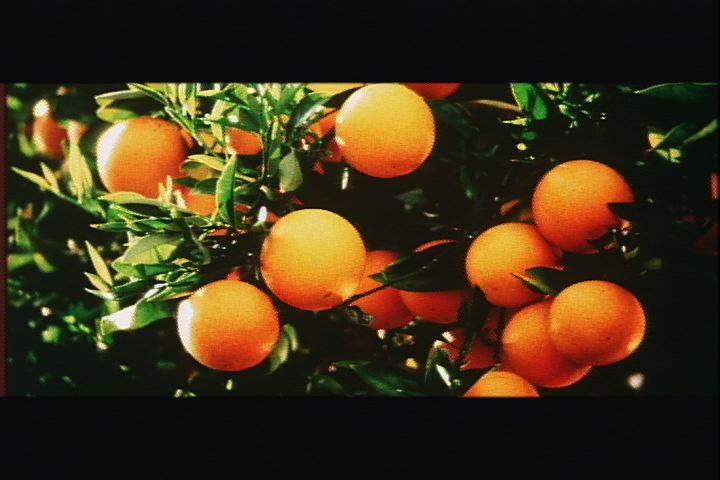 Bunch of oranges.jpg