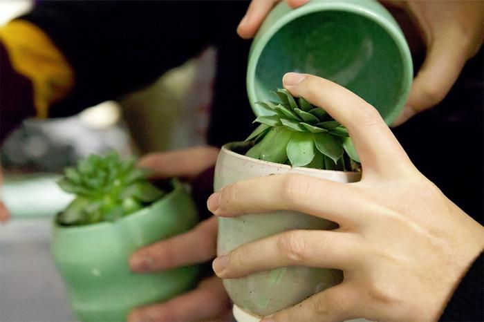 plants-for-patients.png