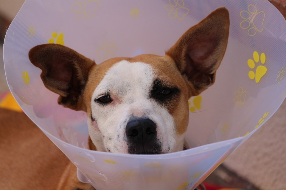 """""""If I can't get this cone off my head, at least I can sit around and learn about Medpay!"""" - Dog"""