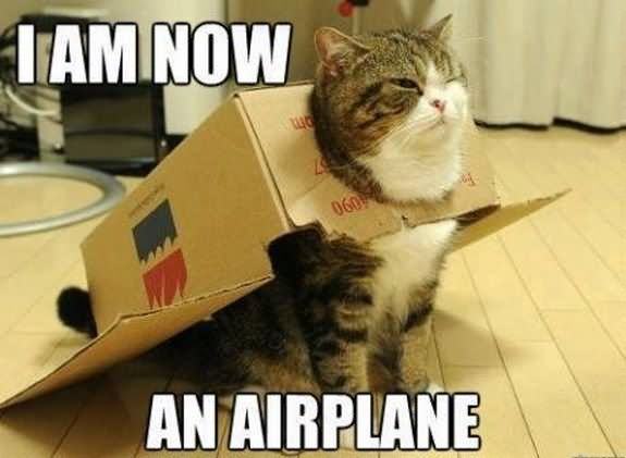 Funny-Cat-Meme-I-Am-Now-An-Airplane-Image.jpg