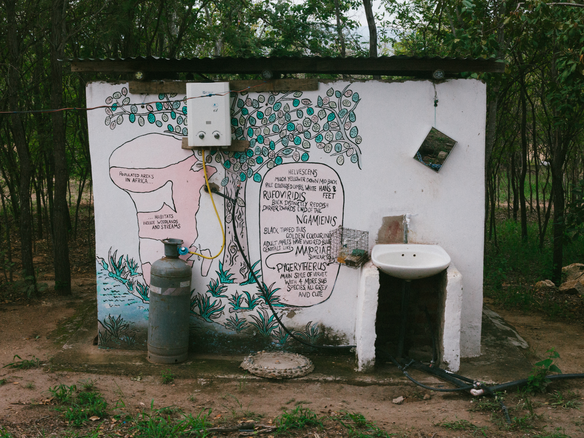 All the bathrooms at the VMF house eco-friendly composting toilets. This bathroom boasts a mural that explains the different vervet sub-species