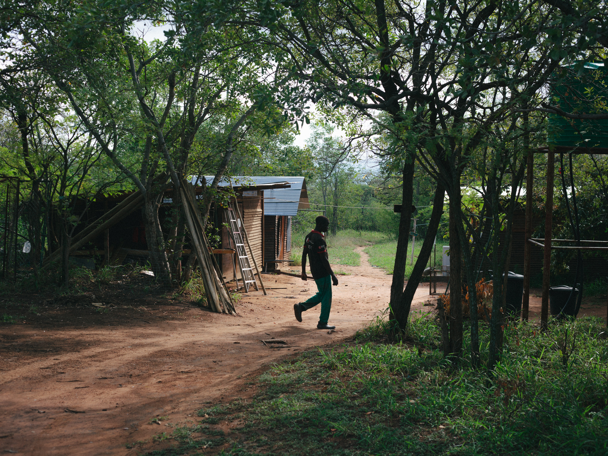 A worker heads toward the baby cabins