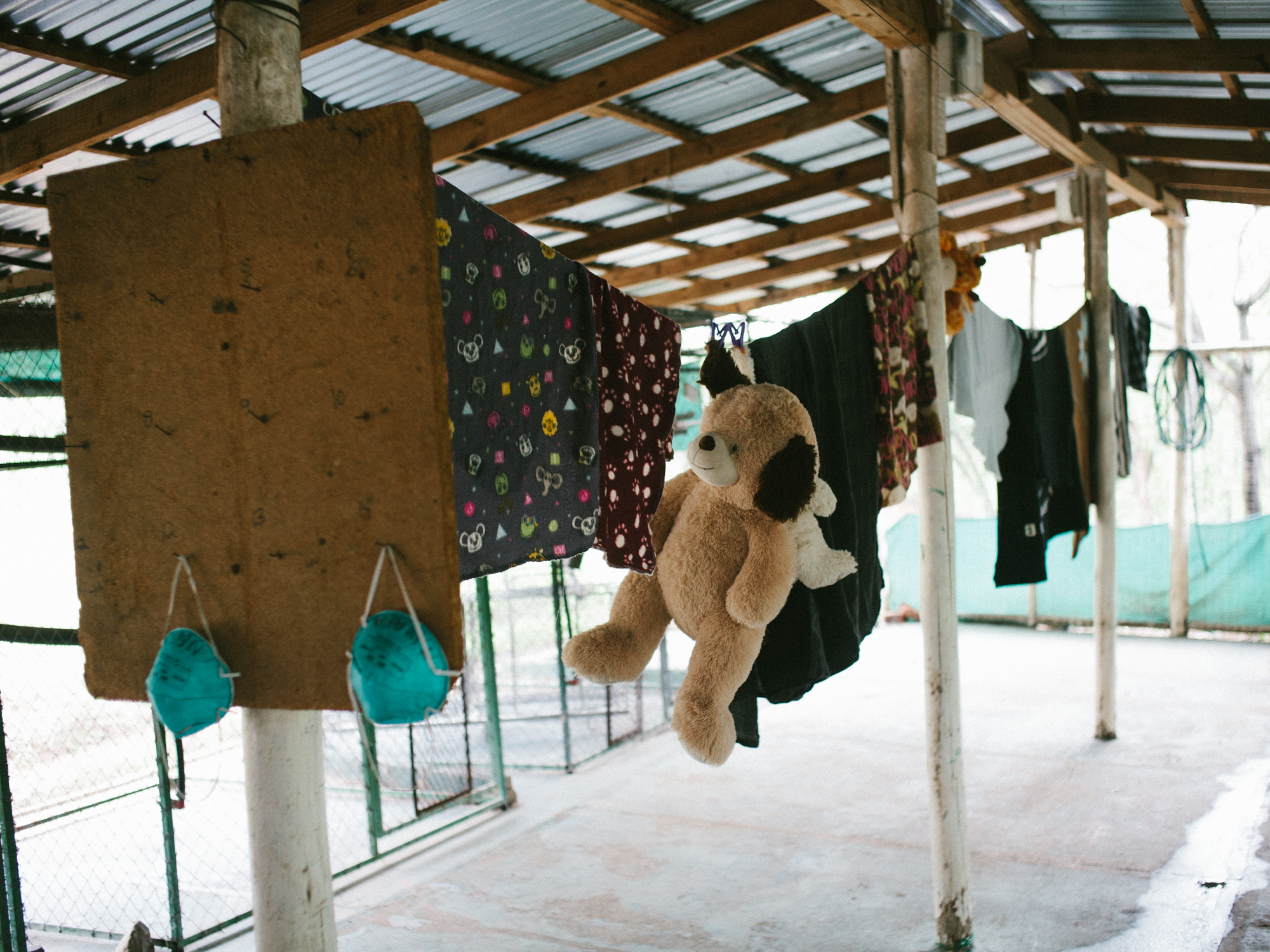 Sick Bay, where sick and injured vervets are treated.