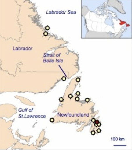 Sightings of belugas (yellow stars) and a single narwhal sighting between 1998 and 2007
