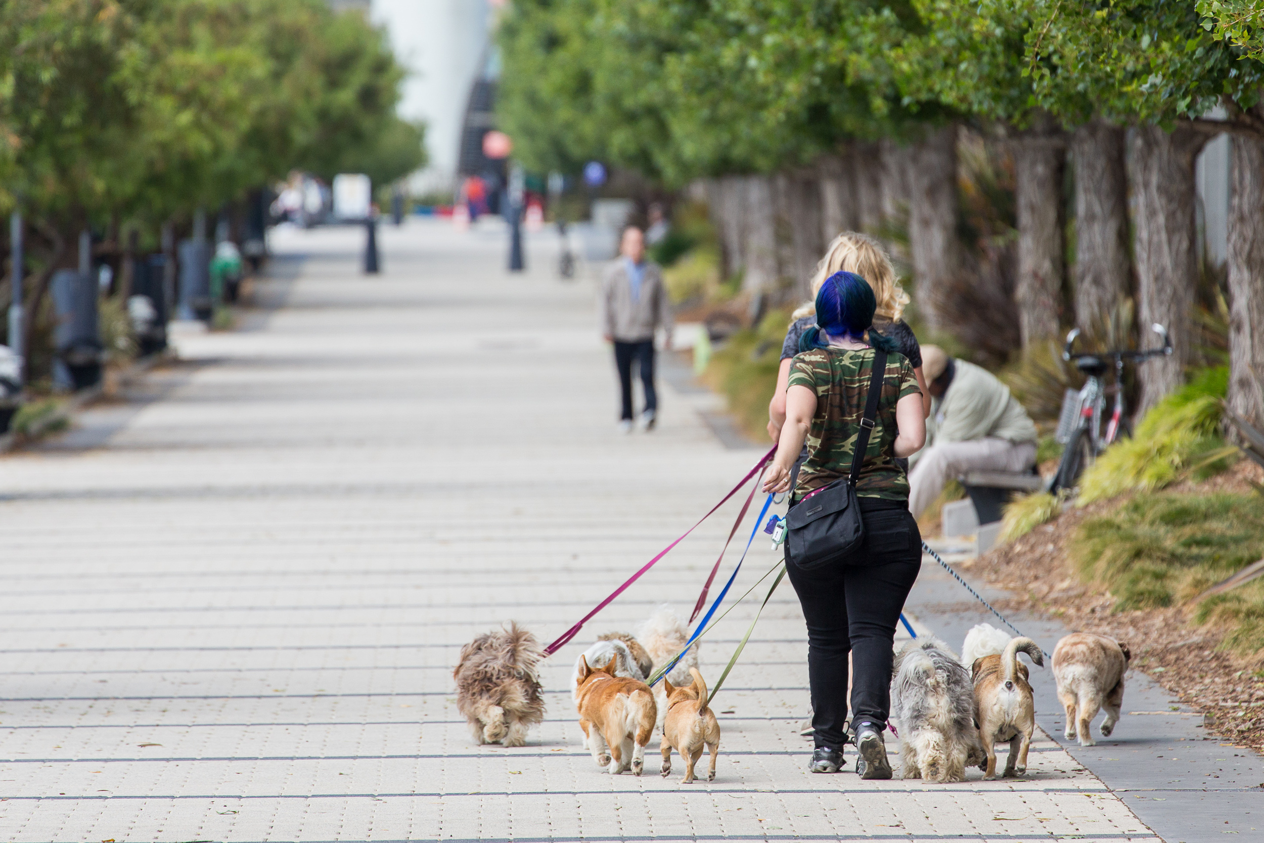 Dog Walk Esplanade.jpg