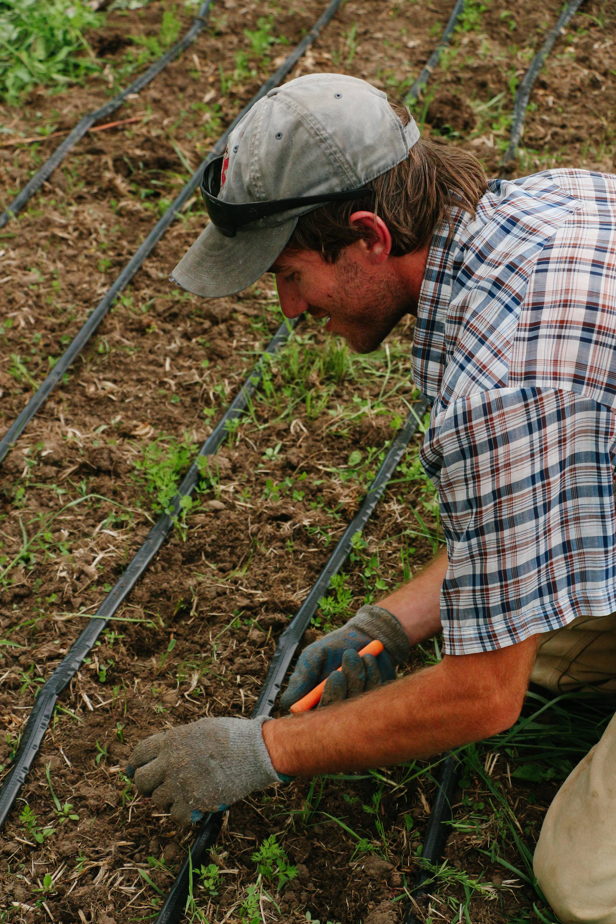 Ben Pfeffer weeding at Raisin Roots Farm