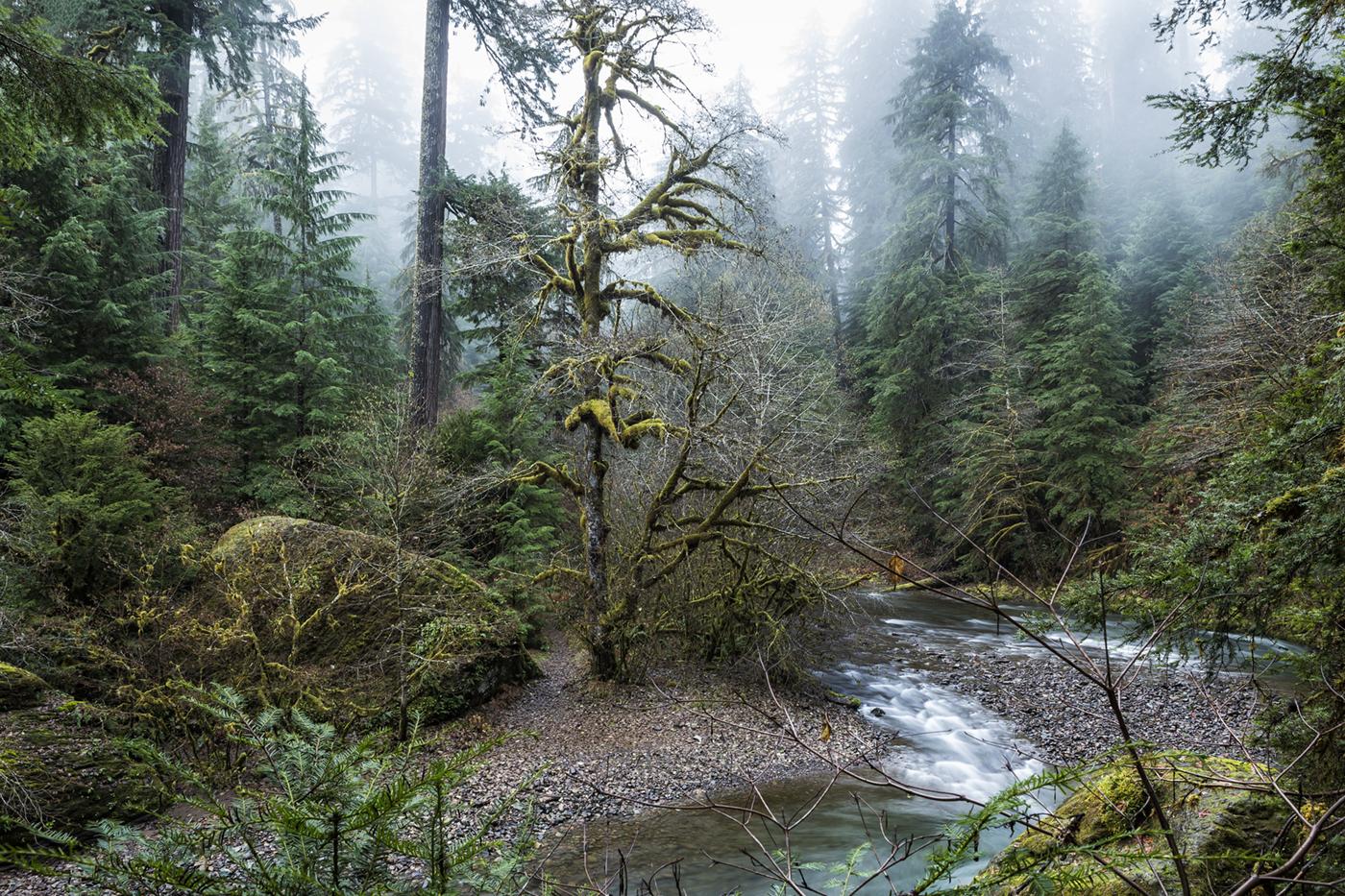 A Creek Runs Through It.jpg