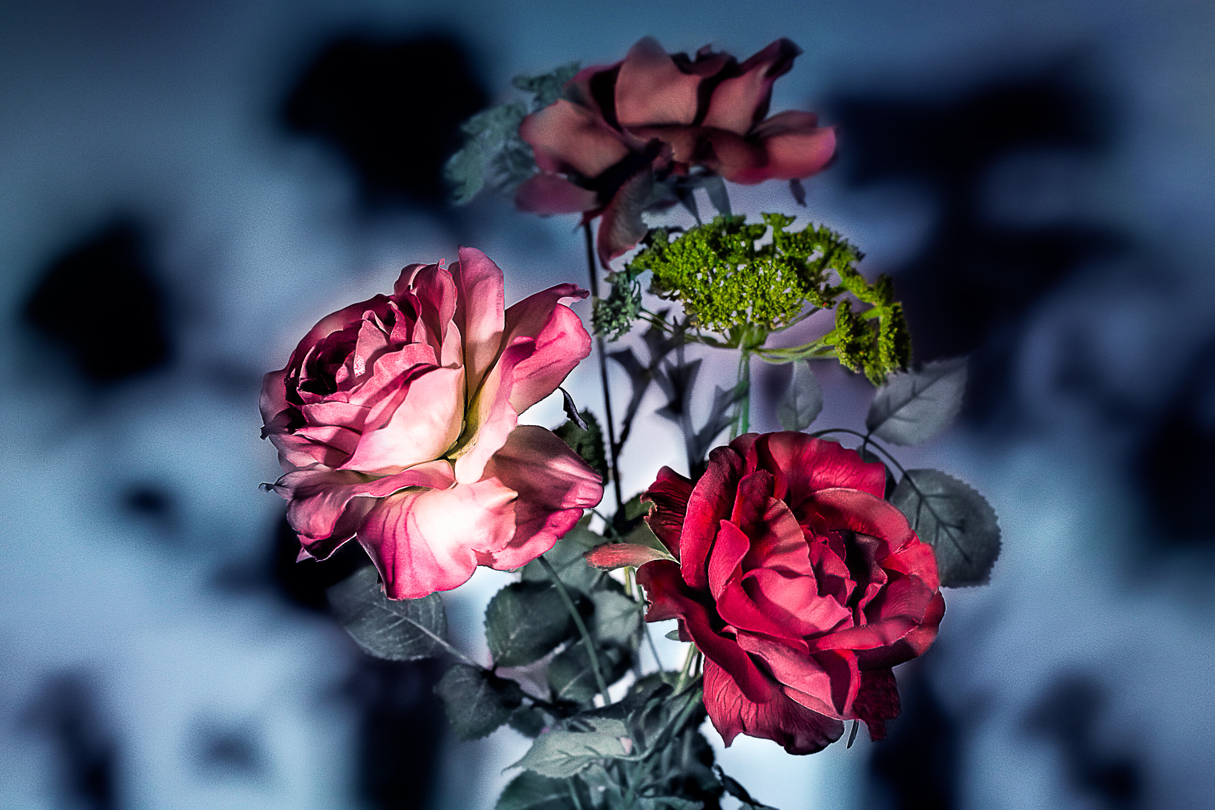 The Flowers In The Shadows