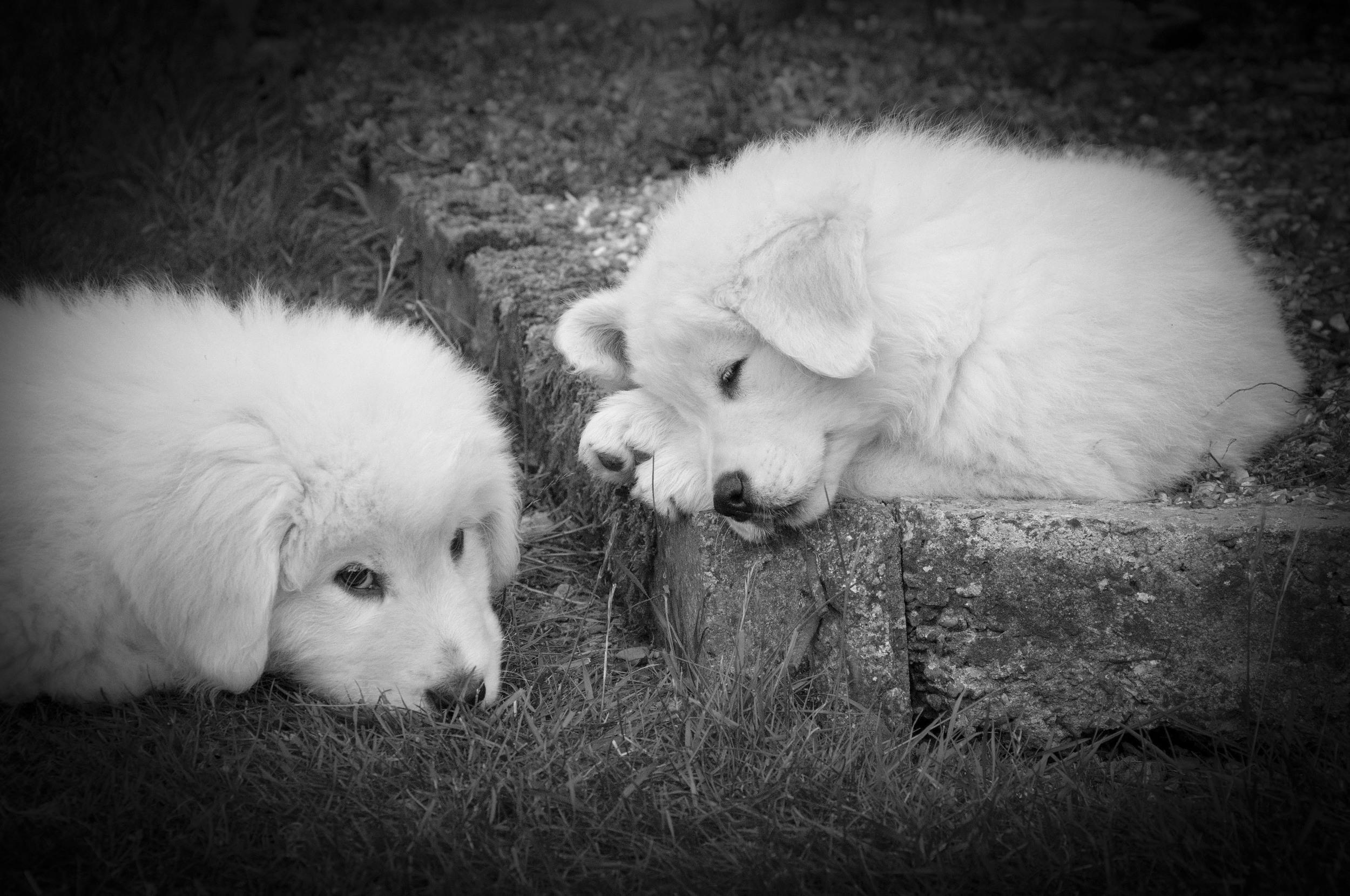 Lucca and Kiki